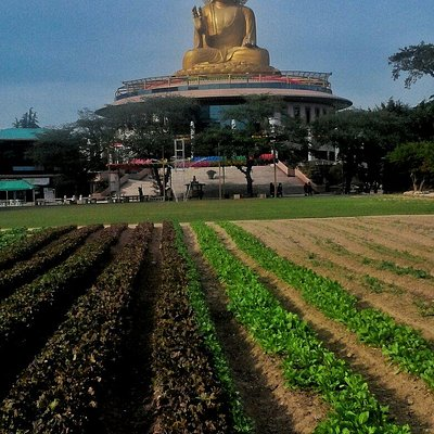 A beautiful temple on farm land
