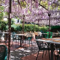 The courtyard with the wisteria in bloom