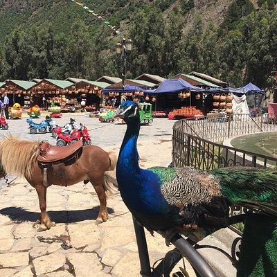 منطقة الحمدانيه في ولاية المدّيه جميلة جدا محاطه بالجبال الخضراء وهي مناسبه للاطفال حيث اطعام ال