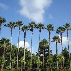 야자수길(Palm Tree Avenue)