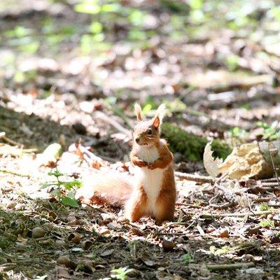 Havannah Squirrels