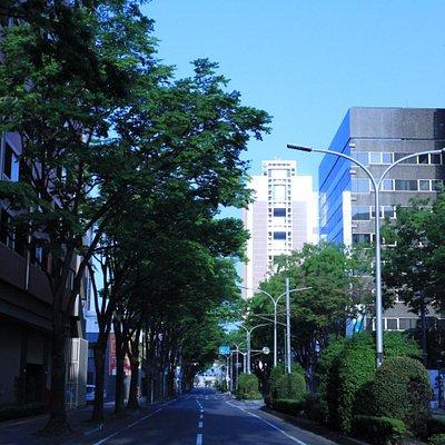 県庁前まで続く 大きなケヤキの並木通り
