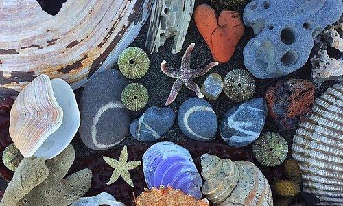 Center for Alaskan Coastal Studies Rocks!