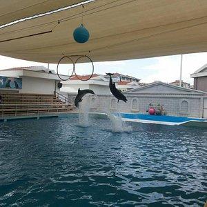 Aksu Dolphinarium
