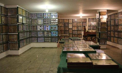 Η αίθουσα του Εντομολογικού Μουσείου Βόλου