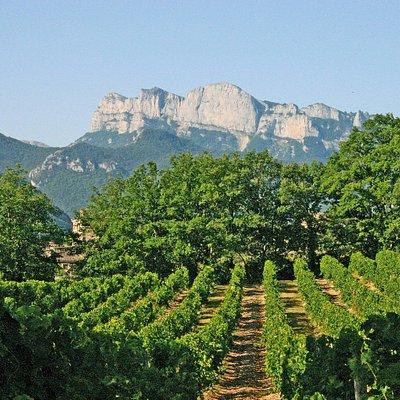 Ballade dans les vignes à Vercheny