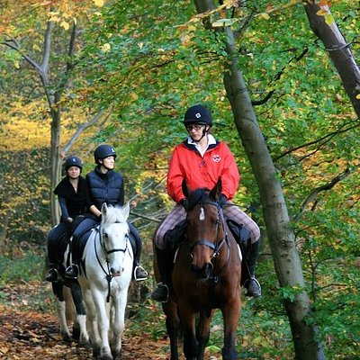 Hacking out in the woods, Trent Park bridal paths