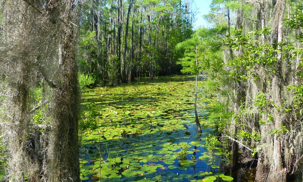 Cypress pond as seen from boardwalk at Grand Bay.