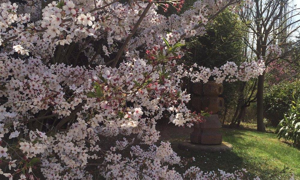 la primavera al parc