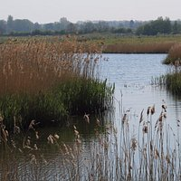 reedbeds at North cave wetlands