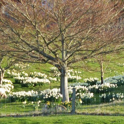 Springtime in the Tree Trust