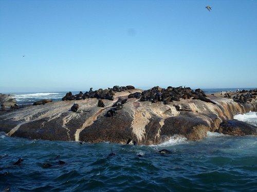Leões marinhos