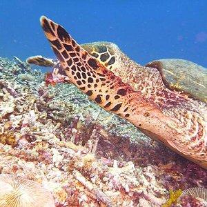 AMAZING animal on gili trawangan