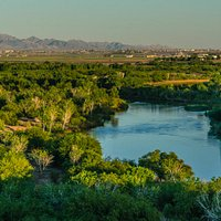 Looking out over Colorado River wetlands