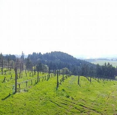 Panorama of winery.  A gorgeous view from the deck.