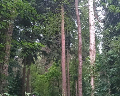 Lynford Arboretum