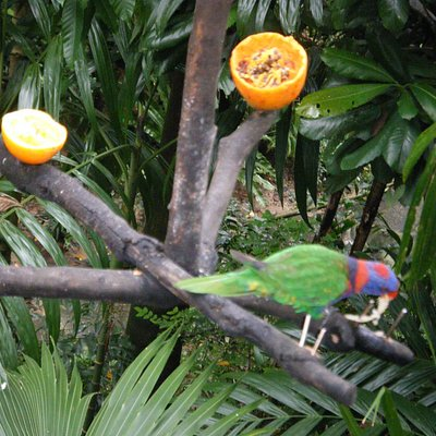 Hong Kong Park Bird Aviary