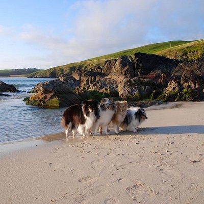 Spiggie beach