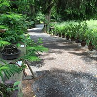Lovely place with lot of bonsai trees. Entry 4€, possibility to buy.