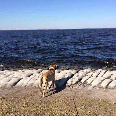 Roscoe checking out the waves of East Lake Tohopekaliga (Toho for short)