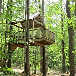 tree house from a far
