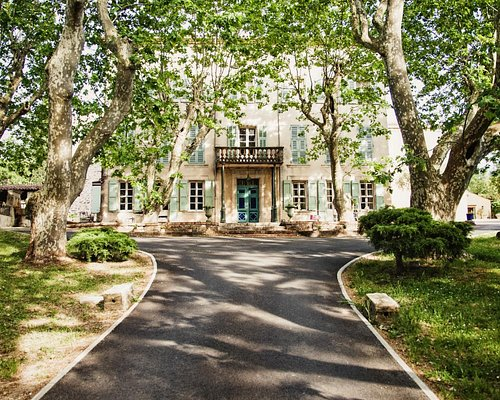 L'allée de platanes tricentaire du Château des Garcinières