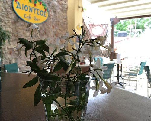 Dionysus Bar & Café
