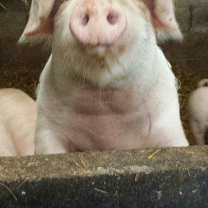 Anall run family farm run to high standards