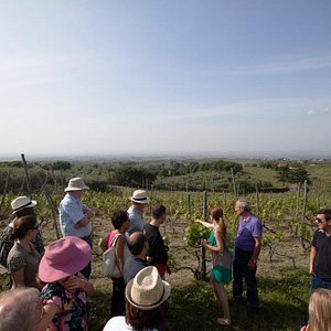touring the vineyard..!
