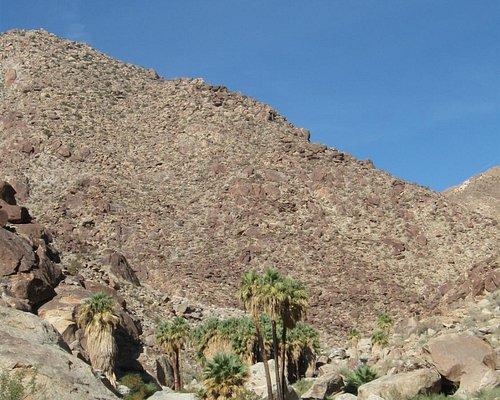 Vied up Palm Canyon
