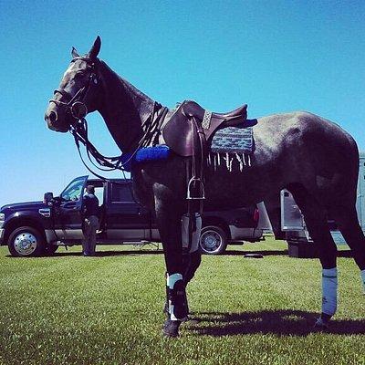 """Capitan"" Our Horses"