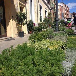 Фестиваль цветов не Corso Umberto