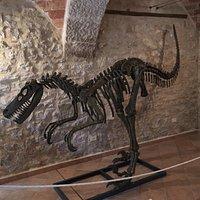 Riproduzione reale dello scheletro di un dinosauro