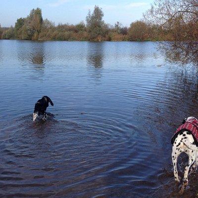 The dogs enjoying the lake