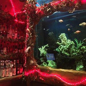 The Aviary Bar
