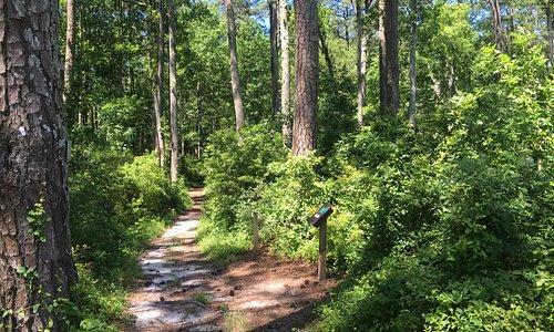 Trail log-in