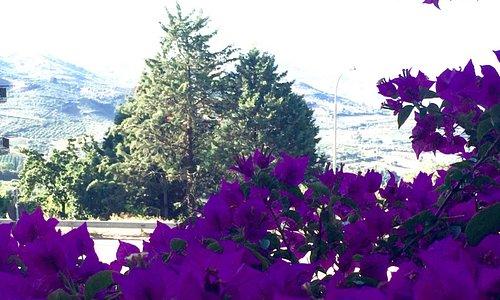 Uno squarcio tipico dei monti Sicani visibile dalla mia camera! buongiorno Bivona!
