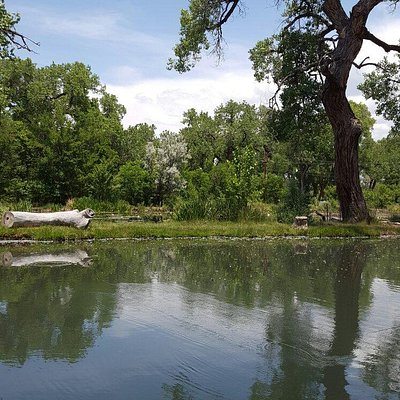 Beautiful Shady spot to fish or picnic with family