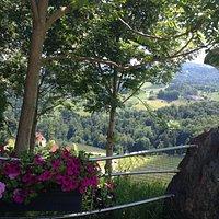 Ambiente im Gastgarten
