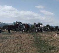 Azienda Agricola Cavalli