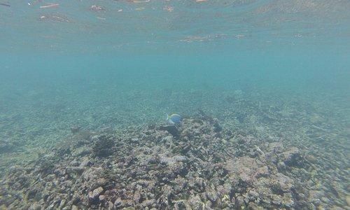 Snorkelling à Coco Island