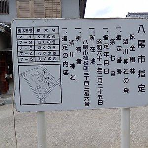 境内の保全樹林図