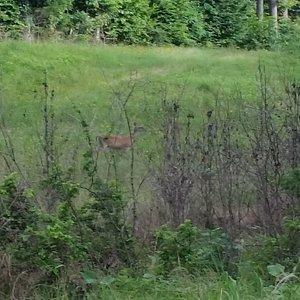 Paul Boorman Trail wildlife!