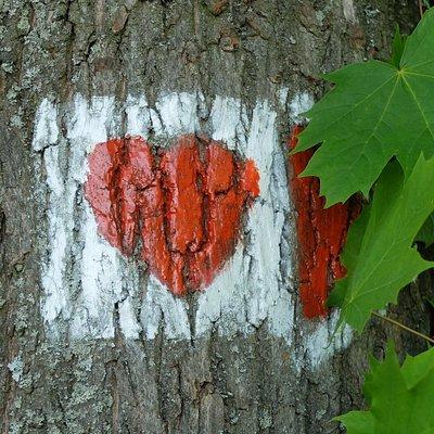 Das rote Herz weist den Weg