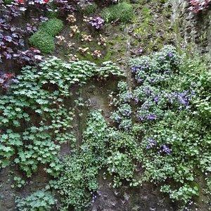 Hangende tuinen Rue Vinet