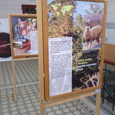 detail výstavy Greenpeace