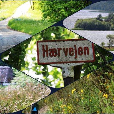Glimt fra Hærvejen omkring Vonge og Kollemorten