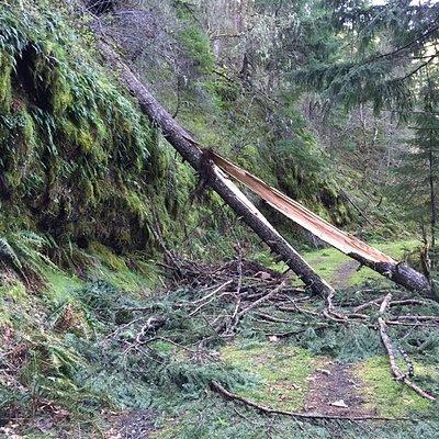Tanner Creek Trail