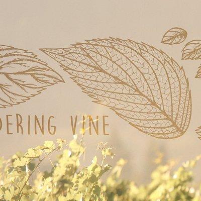 Wandering Vine