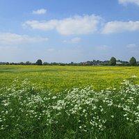 The Severn Ham : Lovely walk